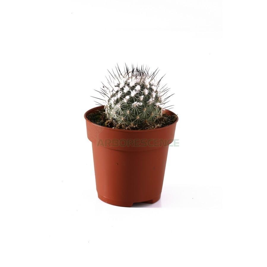 cactus-varie-decor